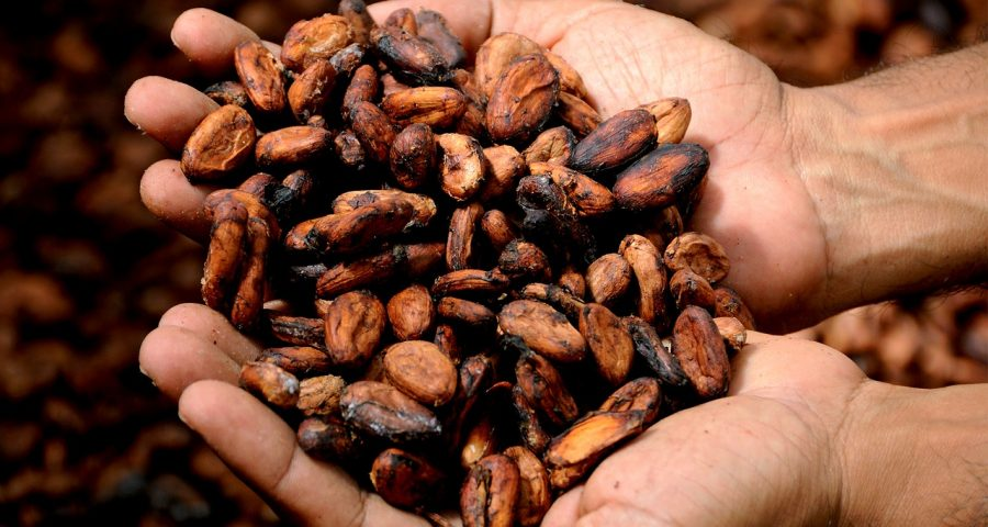 kakao-roh-hände