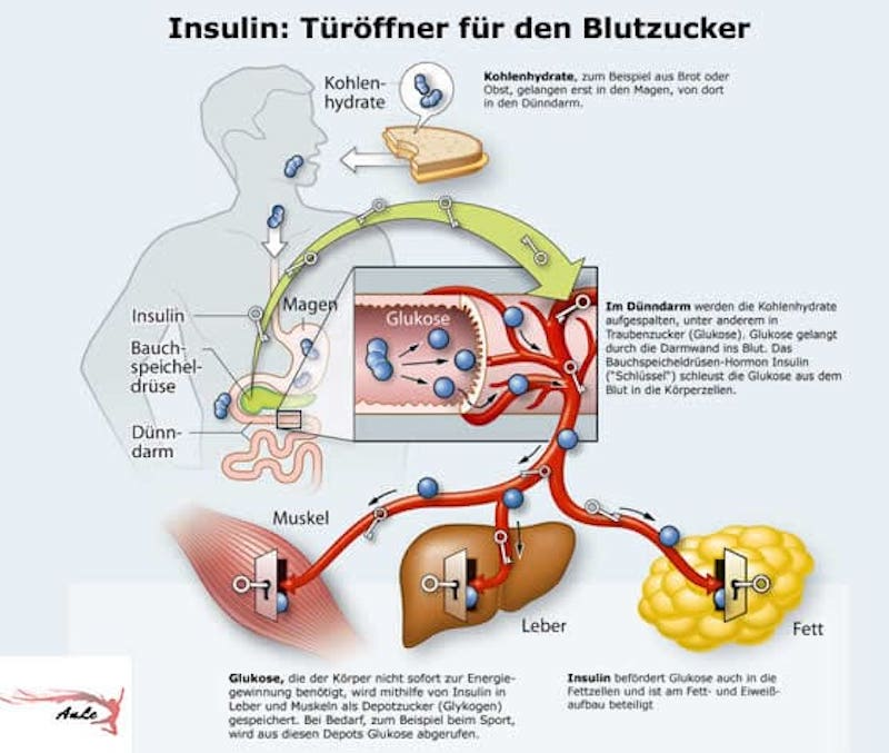 zuckerfreie-Ernährung-insulin-anle-infografik